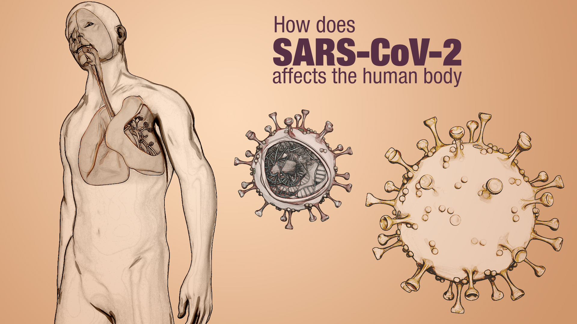 Effects of SARS-CoV-2 infection